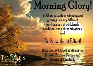 morning glory adapting in life